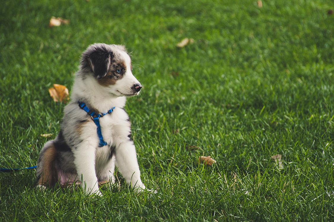 Dog lawn care