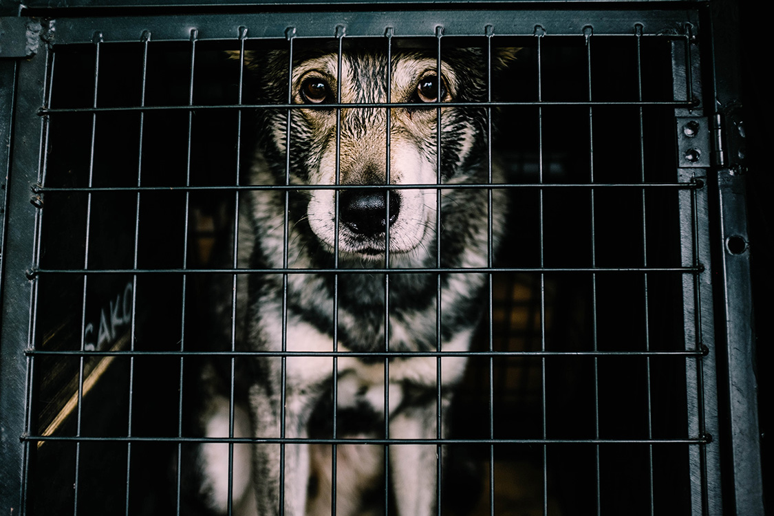 Reasons dogs end up in a shelter or rescue