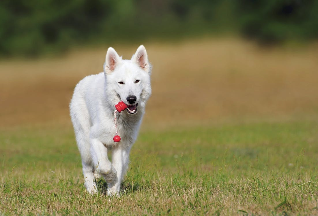 Dog Park Tips